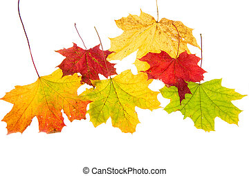 autumn leaves, isolated