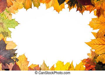 autumn leaves, kleurrijke