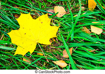 Autumn Leaves Laying in the Grass