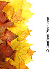 leaves in beautiful autumn colours on white background