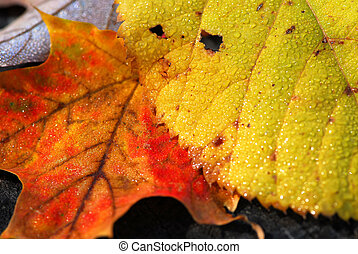 Autumn leaves macro - Natural macro background of yellow and...