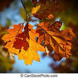 Multicolored autumn oak leaves over blue background