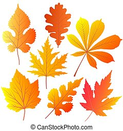 Autumn leaves of chestnut, oak, currant, mulberry, maple. -...