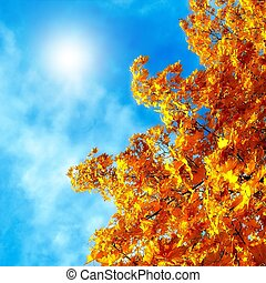 Autumn leaves of maple against the blue sky