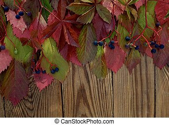 Autumn leaves of red leaves of wild grapes on dark wooden background with copy space.