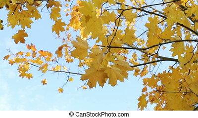 Autumn leaves of trees