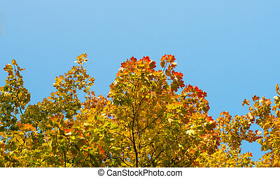 autumn leaves on a background of blue sky