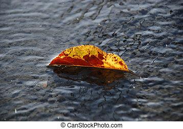 Autumn leaves on a fresh prepared c