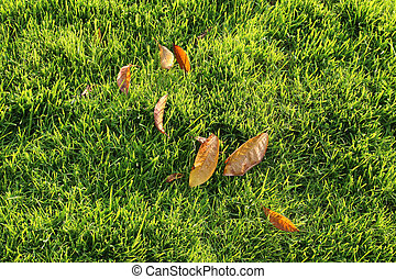 Autumn leaves on a green lawn
