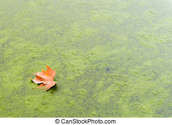 Autumn leaves on a lake