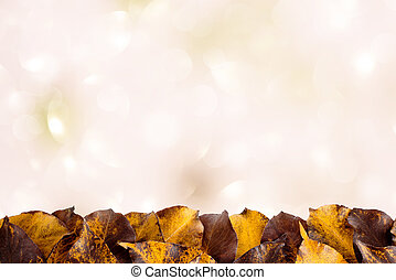 Autumn leaves on a light background