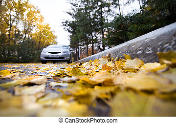 Autumn leaves on a road