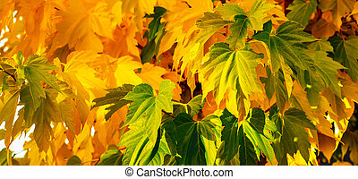 Autumn leaves on a sunny warm day