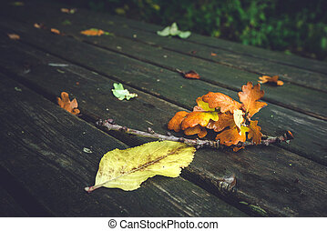 Autumn leaves on a wooden bench
