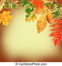 Autumn leaves on a yellow background