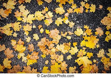 Autumn leaves on asphalt