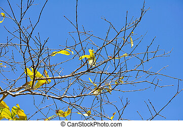 Autumn leaves on blue sky background