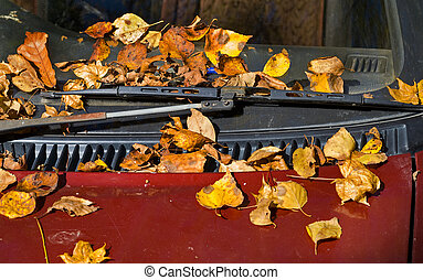 Autumn leaves on car 3