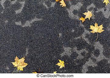 Autumn leaves on dark grey wet pavement background - Yellow...