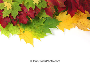 Autumn leaves on edge with white space