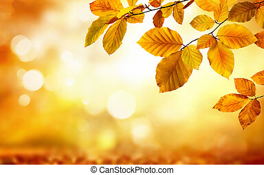 Autumn leaves on glowing blurry background