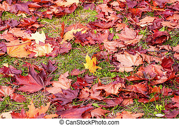 autumn leaves on grass background