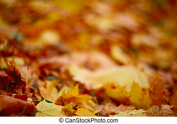 Autumn leaves on ground - Dry maple colorful autumn leaves...