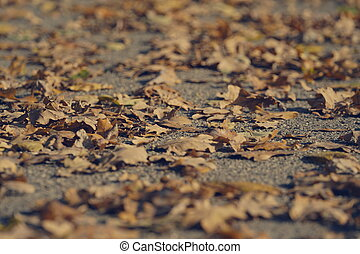 Autumn leaves on ground, low angle