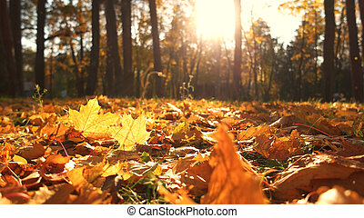 Autumn leaves on ground with sunlight rays.