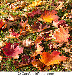 autumn leaves on meadow