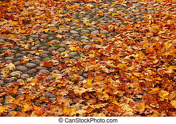 Autumn leaves on old cobbled street
