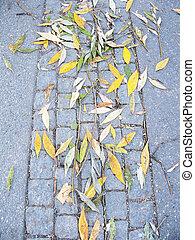 Autumn leaves on stone