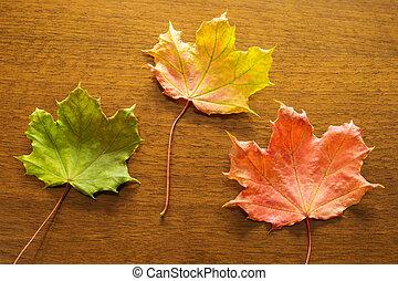 autumn leaves on table