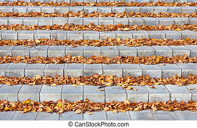 autumn leaves on the concrete stairs