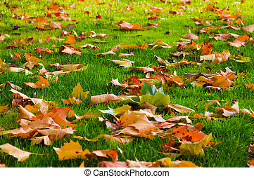 Autumn leaves on the green grass.