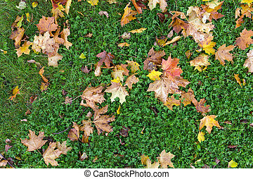 Autumn leaves on the green grass