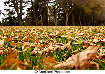 Dry autumn leaves on the green grass