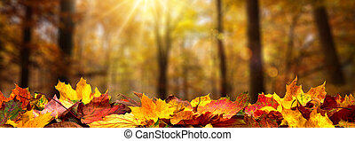 Autumn leaves on the ground in a forest
