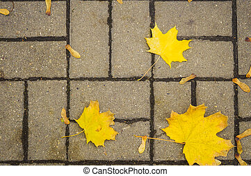 Autumn leaves on the pavement slab