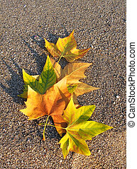 autumn leaves on the sand