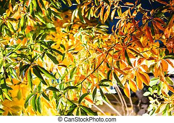 Autumn leaves on the tree