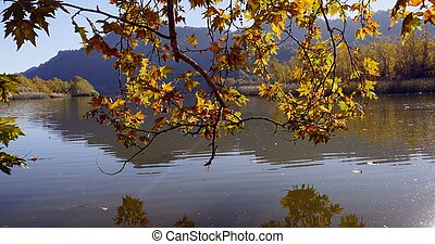 autumn leaves on tree branch above the lake