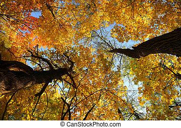 autumn leaves on trees under sky
