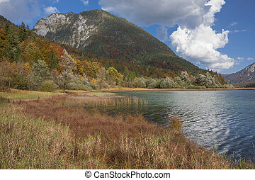 Autumn leaves on trees with reed at lake Weitsee, Bavaria Germany