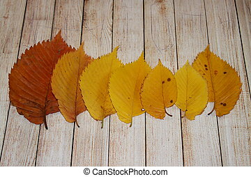 Alder autumn leaves on weathered wooden background