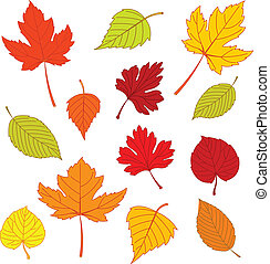 Illustration of different autumn leaves isolated on white