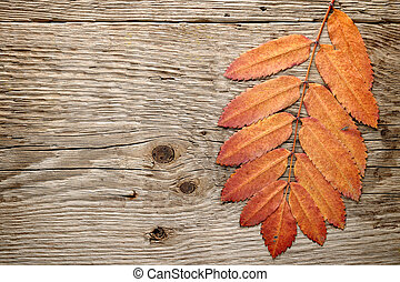 Autumn leaves on wood background