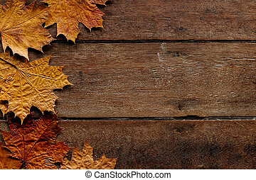 Autumn leaves on wooden background with copy space. Wallpaper for September 1.