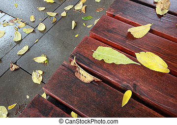 autumn leaves on wooden bench