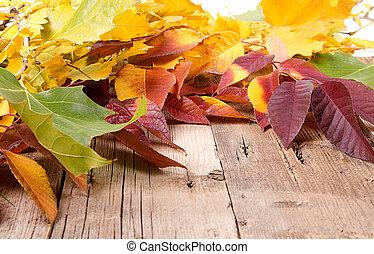 Autumn leaves on wooden plank
